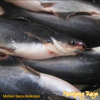 ikan patin segar
