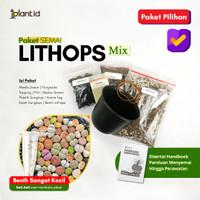 Paket Semai Lithops Mix   GARANSI BENIH LITHOPS ASLI!