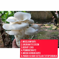 baglog jamur tiram putih