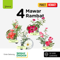 Paket HEMAT! 4 Mawar Rambat