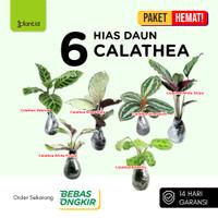 Paket Tanaman Hias Daun 6 Calathea