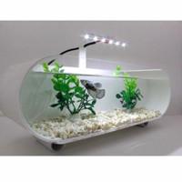 aquarium mini akrilik unik aquarium ikan cupang fullset