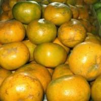 Buah Jeruk Medan Brastagi SUPER JUMBO Manis Orange Juice Jus Peras Top