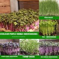 Benih Microgreens