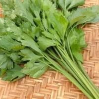 SayurHD sayur segar daun seledri per ikat