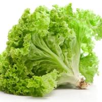 SayurHD sayur segar selada lalapan 250gr
