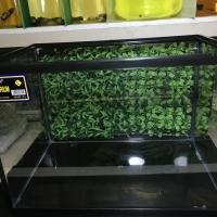 Aquarium Triset Nikita Size L Warna Biru/Hitam