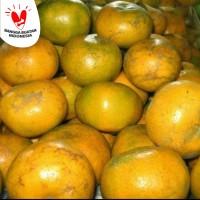 buah jeruk medan brastagi manis banyak air fresh segar wangi