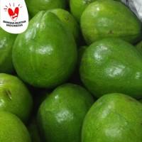 buah alpukat papua raja kuning mentega avocado butter lokal