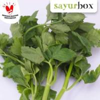 Daun Seledri Conventional 100 gram Sayurbox