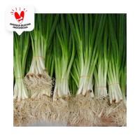 Daun Bawang Cung / Chung / Kecil - Bakoel Sayur Online