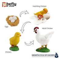 mainan siklus hidup hewan - Ayam dan Kartu