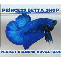 Ikan Cupang BBL Series Royal Blue Line Avatar