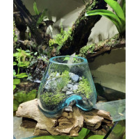 AQUARIUM CUPANG UNIK / AQURIUM KACA TIUP GLASSWOOD SIZE 10cm