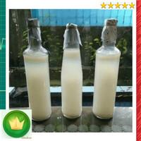 Starter nata de coco, bibit bakteri acetobacter xylinum || buat sari