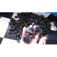 TERLARIS Bahan black opal ranting campuran kecil sedang.calon jarong