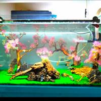 Rumput Sintetis Premium 40x60 Cm Dekorasi Aquarium Dan Aquascape