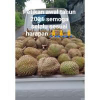 Durian Montong Bangkok Duren Asli Bali Enak Legit Duren KanE Buleleng