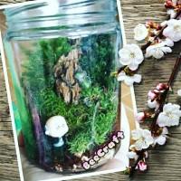 set up terrarium mini garden mini paludarium Aquarium mini