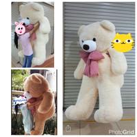 boneka teddy bear beruang super besar super giant 2 meter