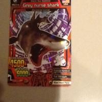 animal kaiser s1 grey nurse shark