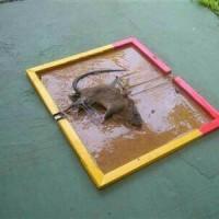 Lem Papan Perangkap Tikus /Rat Trap Glue Cap gajah