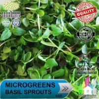 MICROGREENS - Benih BASIL Sprout Micro Green Basil / Kemangi IMPORT