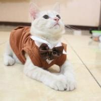 Kaos tuxedo warna coklat untuk kucing / baju kucing dan aksesoris lucu