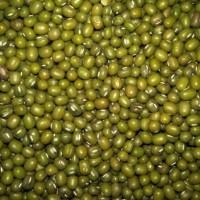 kacang hijau bening