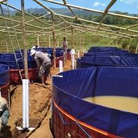 Kolam terpal bulat bioflok - bahan Korea diameter D5 X T1,2
