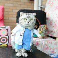 Baju Kucing Doctor / Bantal / Makanan Kucing / helm retro / jilbab