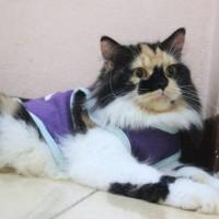 Kaos sablon hello kitty untuk kucing / baju kucing imut size S M L XL
