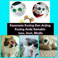 Kacamata kucing / Kaca mata kucing / Baju kucing / Rumput kucing