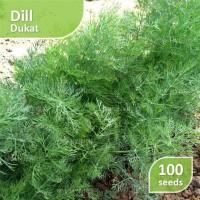 100 Seed - Dill Dukat (Benih Dill)