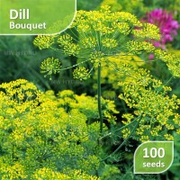 100 Seed - Dill Bouquet (Benih Dill)