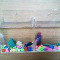 aquarium dinding ikan cupang sekat 2 mini