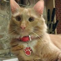 kalung anjing dan kucing + bandul liontin paw