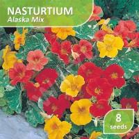 8 Seed - Nasturtium Alaska Mix (Benih Bunga Nasturtium)