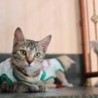 kaos sablon biru hello kitty imut / baju kucing murah size S M L XL