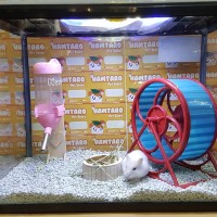 terarium kandang hamster aquarium paket hemat