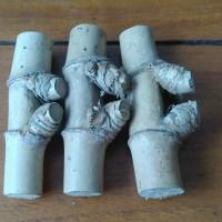 Bambu Petuk Asli Bambu