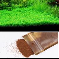 Bibit Benih Small Leaf Grass Carpet Seed Aquascape Aquarium Plant Seed