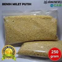Benih / Biji Milet Putih - Benih Boneka Horta - Berkualitas (250 gram)