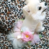 baju anjing kaos hewan kaus kucing kostum dog dress tutu cat flower
