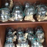 membuat aquaspace aquarium kecil