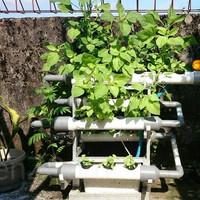 Mini Garden Hydroponic/ Taman Portable DFT Hidroponik V.3.0