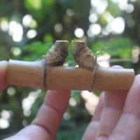 Bambu Petuk Pethuk