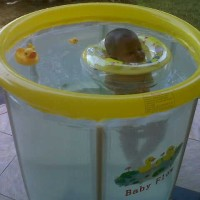 Swimming Pool Baby Flow Duck Kolam Renang Spa Bayi Bahan Karet