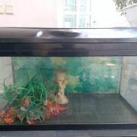 Aquarium nisso