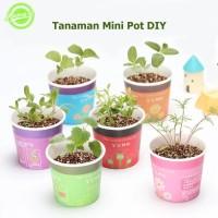 Tanaman Mini Pot DIY Lavender Cosmos Anyelir Mint DIY Mini Plant
